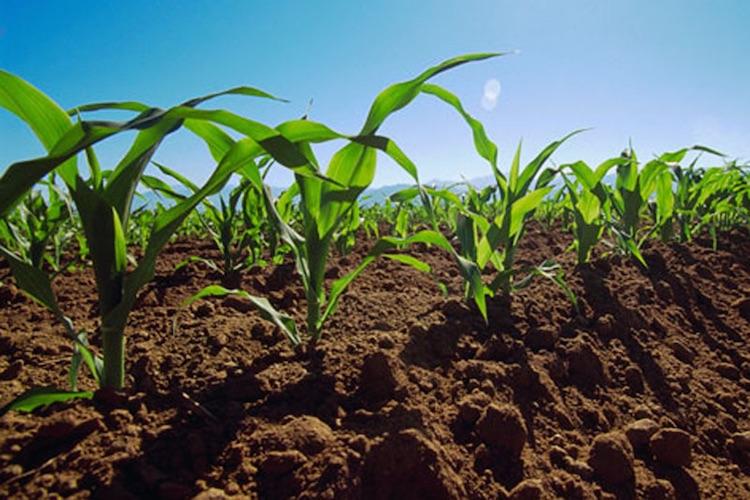 NEC e Dacom colaboram em solução agrícola de precisão
