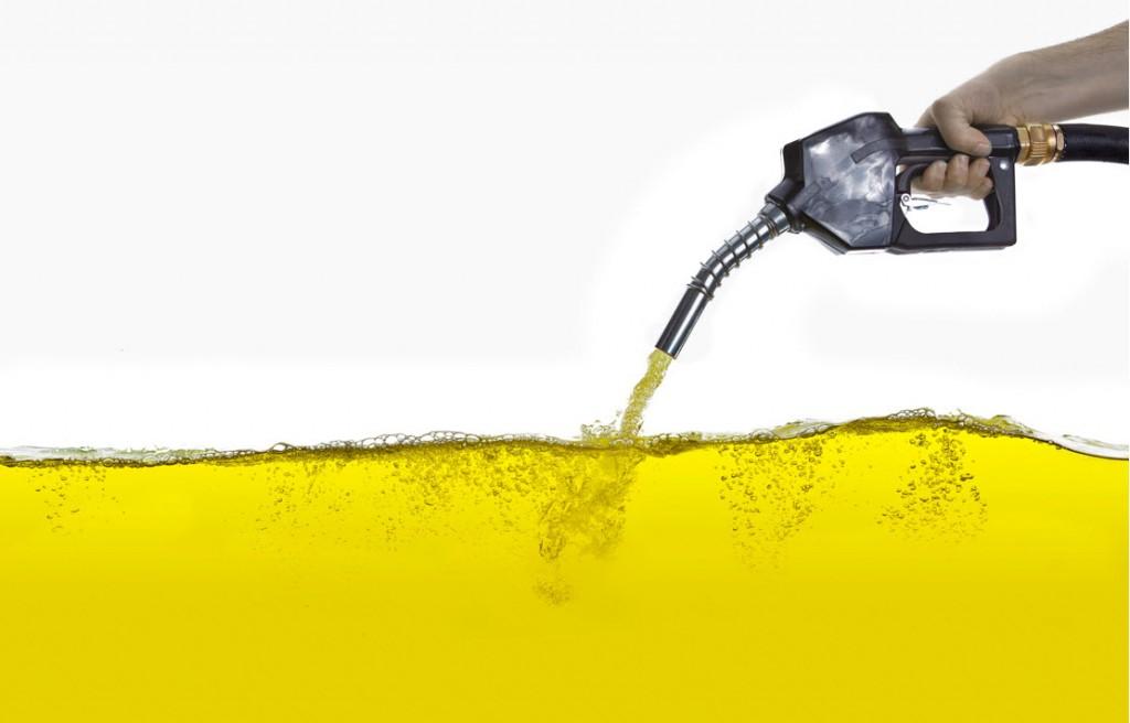 Investigadora portuguesa premiada com tese sobre pegada ambiental do biodiesel