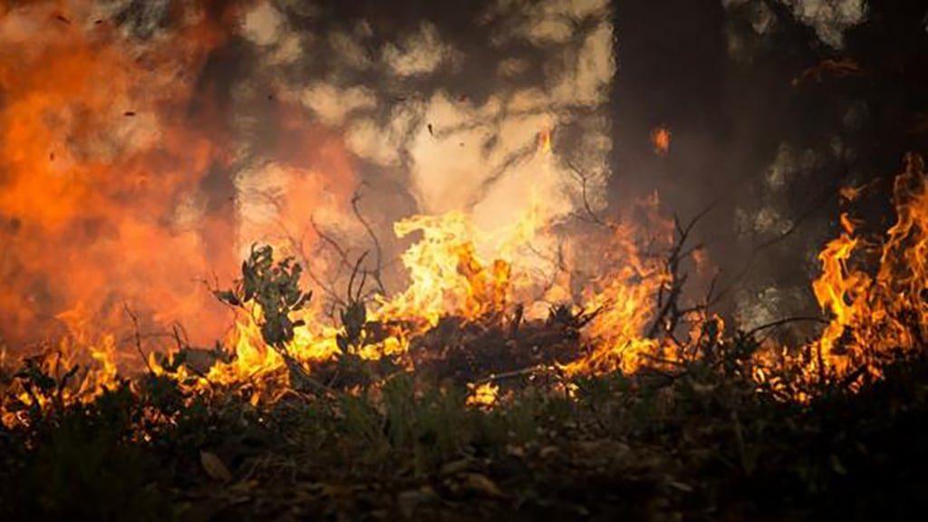 IBM promete eficácia no combate aos incêndios com o Bee2FireDetection